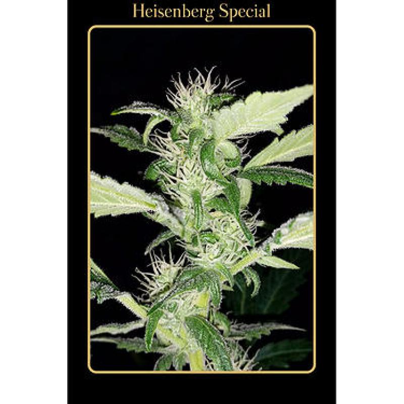 Auto Heisenberg Special Feminised Seeds
