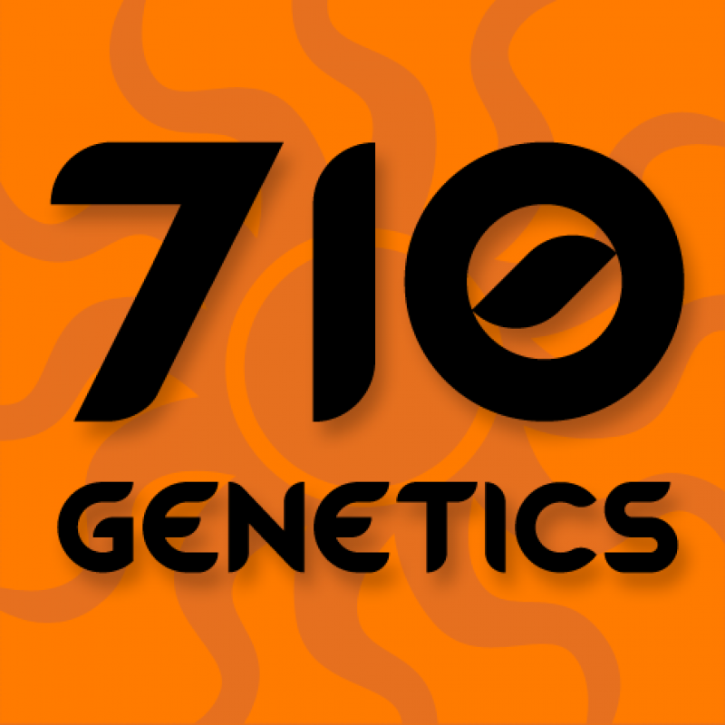 710 Cheese Feminised Seeds
