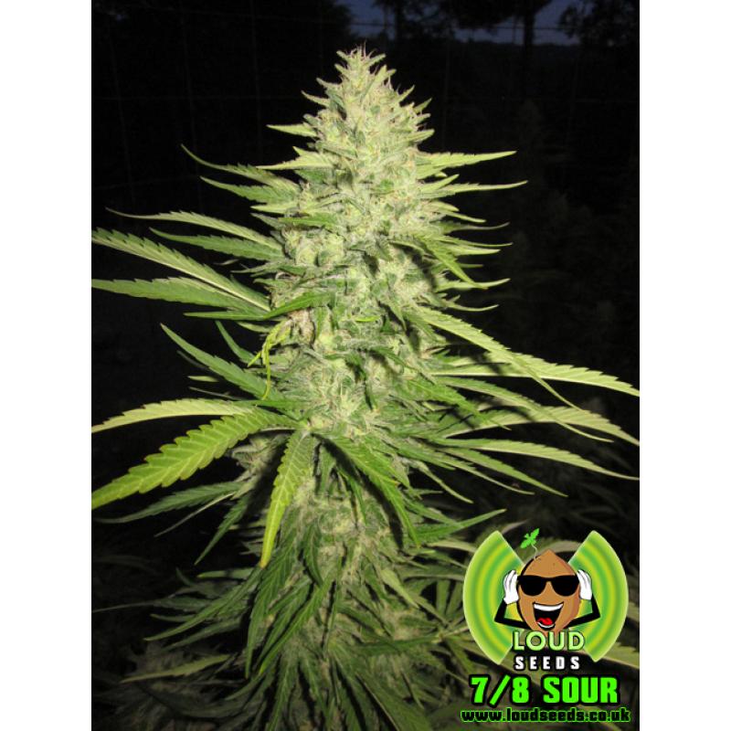 7/8 Sour Regular Seeds