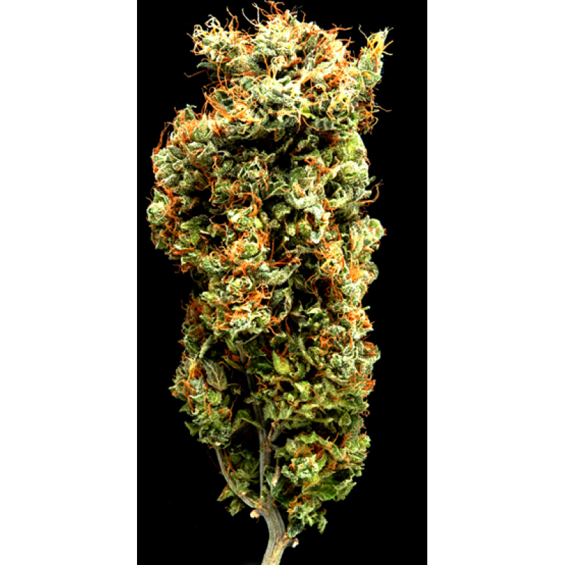 Afghani Mazar-I-Sharif Regular Seeds - 5