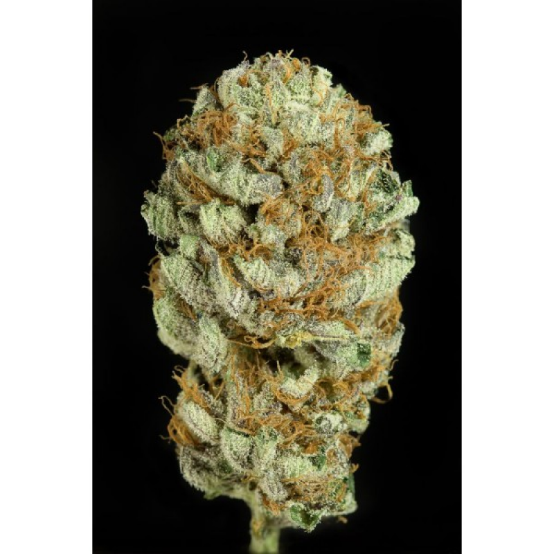 Blue Kush Feminised Seeds